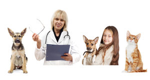 Veterinarian and the owner and the patient Stock Images