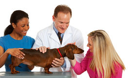 Veterinarian: Owner Pets Dog at Vet's Office Stock Image