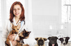 Veterinarian and pets Royalty Free Stock Images