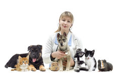 Veterinarian and Pets. On a white background Royalty Free Stock Photo