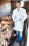 Veterinarian in pigsty. Portrait of male veterinarian in white coat and facial mask with syringe and vial in pigsty Stock Image