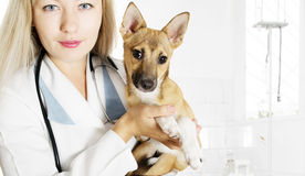 Veterinarian and Puppy Royalty Free Stock Photos