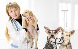 Veterinarian and Puppy Stock Image