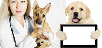 Veterinarian and Puppy Royalty Free Stock Image