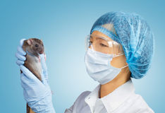 Veterinarian with a rat Stock Photo