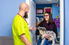 Veterinarian receiving a client with her pet. Veterinarian receiving a client with her miniature schnauzer care women healthcare medical veterinary medicine royalty free stock photography