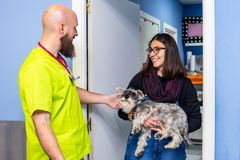 Veterinarian receiving a client with her pet. Veterinarian receiving a client with her miniature schnauzer care women healthcare medical veterinary medicine royalty free stock image