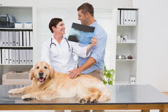 Veterinarian showing x-ray to dog owner Royalty Free Stock Images