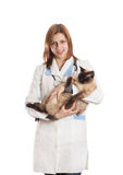 Veterinarian with a Siamese cat Royalty Free Stock Image