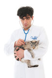 Veterinarian with Siamese cat Stock Photography