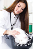 Veterinarian with stethoscope calms Persian cat Stock Photo