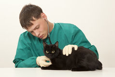 Veterinarian surgeon doctor and cat. Veterinarian surgeon doctor making a checkup of a black cat Stock Photography