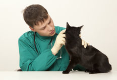 Veterinarian surgeon doctor and cat. Veterinarian surgeon doctor making a checkup of a black cat Stock Image