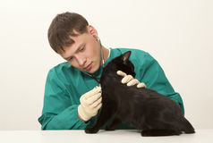 Veterinarian surgeon doctor and cat Royalty Free Stock Photos