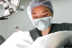 A veterinarian surgeons in operating room Stock Photo