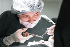 Veterinarian surgery in operation room Royalty Free Stock Photos
