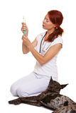 Veterinarian with syringe and dog Stock Photos
