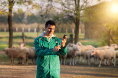 Veterinarian with syringe on farm Royalty Free Stock Image