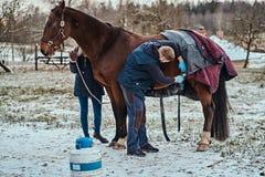 A veterinarian treating a brown purebred horse, papillomas removal procedure using cryodestruction, in an outdoor ranch. Veterinarian treating a brown purebred royalty free stock image