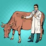 Veterinarian treats a cow farm animal medicine royalty free illustration