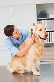 Veterinarian using otoscope to dog Stock Photography