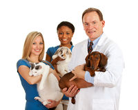 Veterinarian: Veterinary Team Holds Different Animals Stock Image
