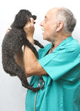 Veterinarian Visit Stock Images