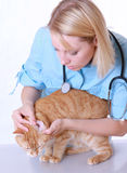 Veterinarian on white Royalty Free Stock Photos