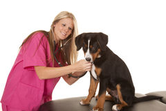 Veterinarian woman with a  dog Royalty Free Stock Photos