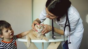 Veterinarian woman examining cat with little boy owner in medical office. Veterinarian women examining cat with little boy in medical office royalty free stock photo