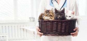 Veterinarian woman. Holding a basket of cats Royalty Free Stock Images