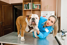 Veterinarian woman Stock Photos