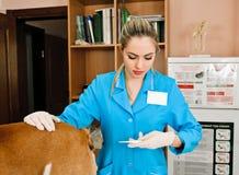 Veterinarian woman Stock Photo