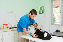 Veterinarian at work. Young male veterinarian at work taking care of injured homeless dog Stock Image