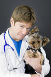 Veterinarian and yorkie Royalty Free Stock Photos