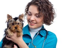 Veterinarian with Yorkshire Terrier Royalty Free Stock Photos