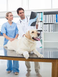 Veterinarians discussing Xray of dog Royalty Free Stock Image