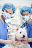Veterinarians with dog Stock Photo