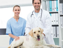 Veterinarians with dog in clinic Royalty Free Stock Photos