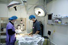 Veterinarians with dog on operating table Stock Image