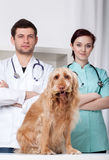 Veterinarians with dog Stock Images