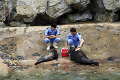 Veterinarians and sea lions Royalty Free Stock Photography
