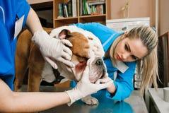 Veterinarians women Stock Photo