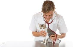 Veterinario ascoltando un gatto Fotografie Stock