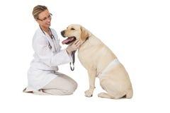Veterinario bonito que acaricia el perro amarillo de Labrador Foto de archivo