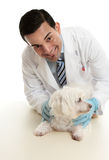 Veterinario che cattura cura di un cane di animale domestico Fotografia Stock