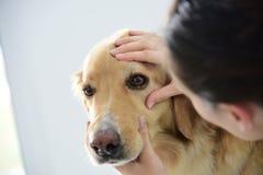Veterinario che controlla gli occhi del cane fotografia stock libera da diritti