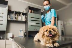 Veterinario che fa un'iniezione al cane fotografia stock libera da diritti