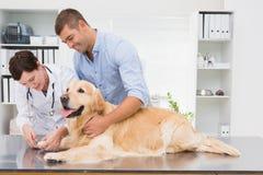 Veterinario che per mezzo del tagliatore di chiodo su un cane con il suo proprietario Fotografie Stock