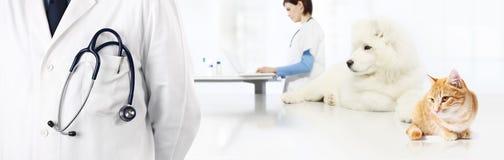 Veterinario con el estetoscopio en el bolsillo, el perro y el gato, clínica b del veterinario Imagen de archivo libre de regalías